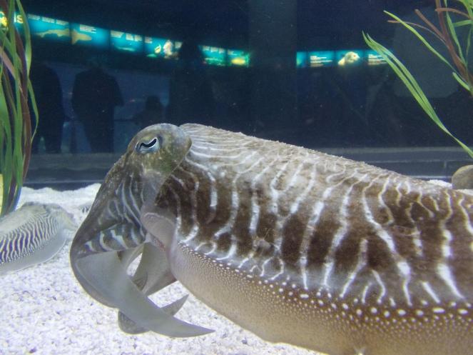 animal marin 1