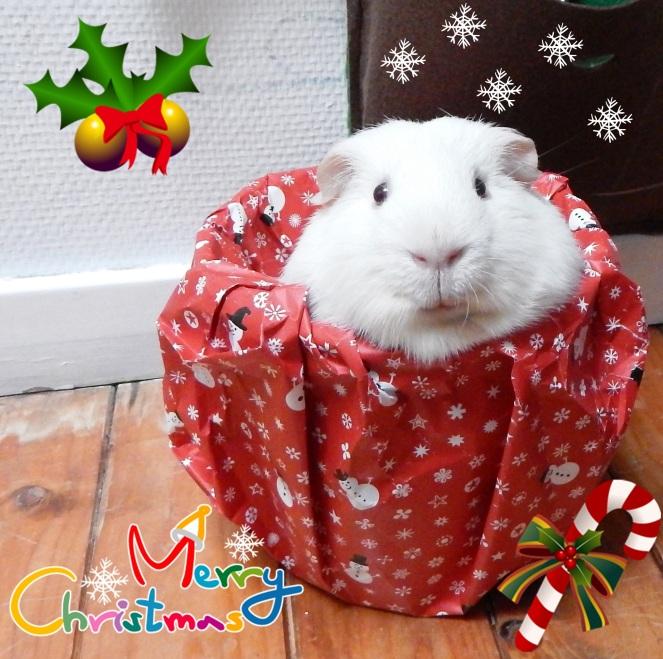 merry-christmas-data